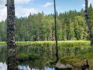 Metsähallituksen tulostavoitetta on laskettava